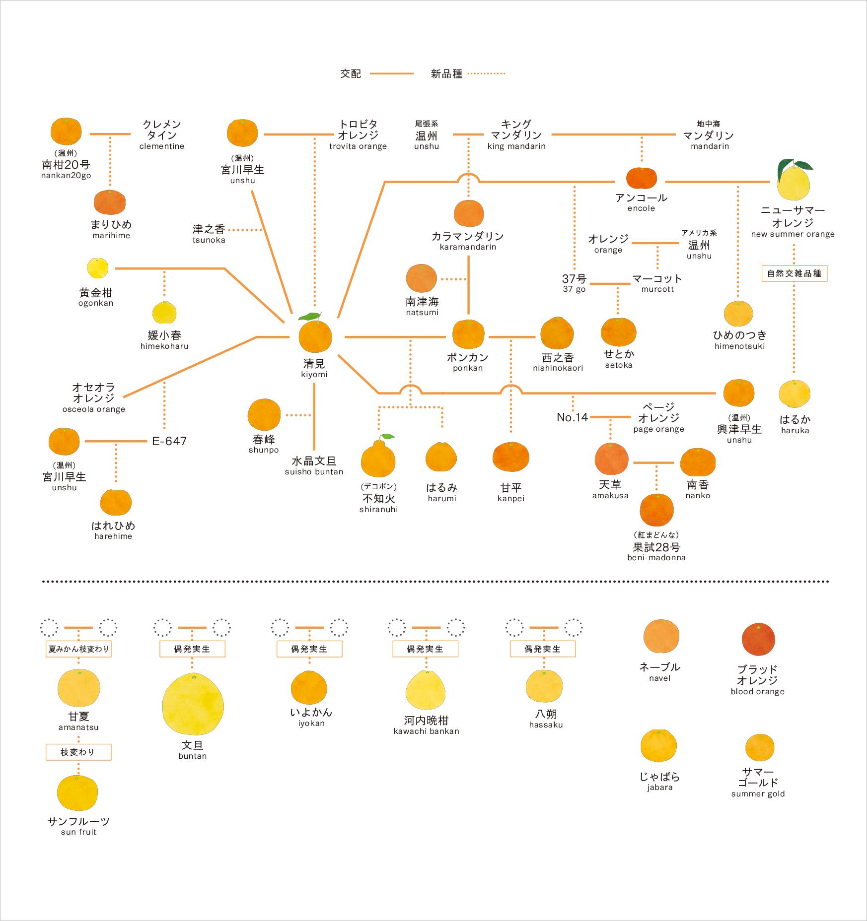 201905みかん系図